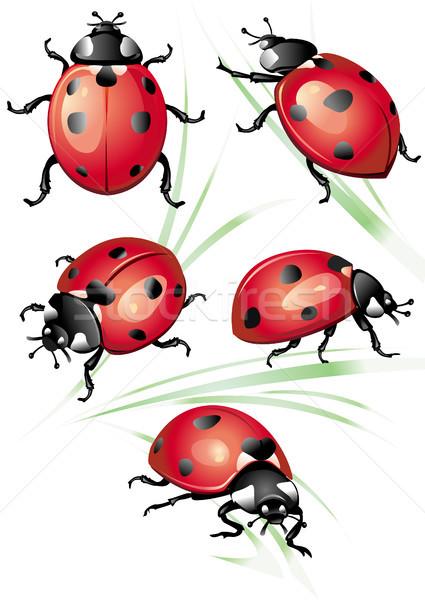 набор Коровка природы красный жизни животного Сток-фото © Wikki