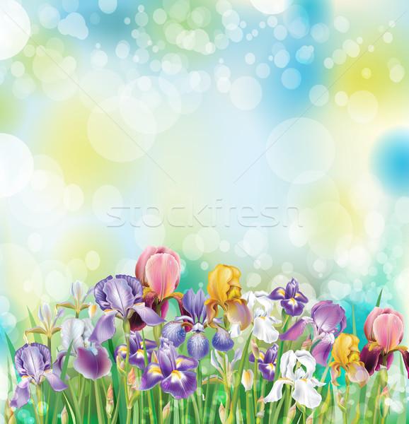 Iris цветы природы фон лет цвета Сток-фото © Wikki