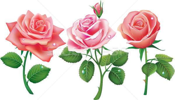 набор три розовый роз любви подарок Сток-фото © Wikki