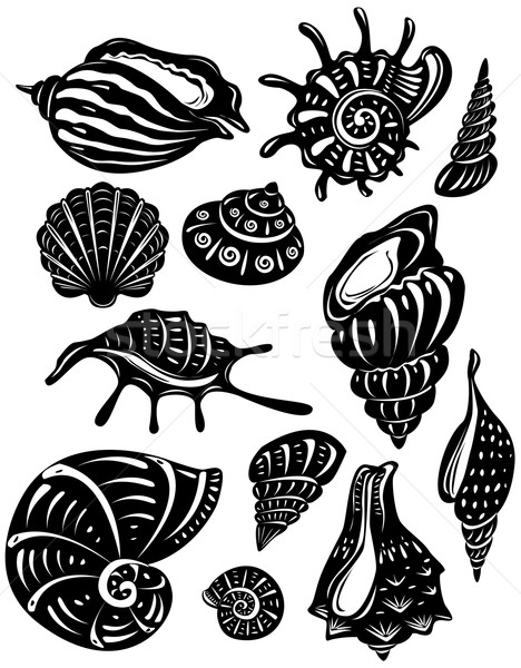 Stockfoto: Ingesteld · decoratief · shell · natuur · onderwater · natuurlijke