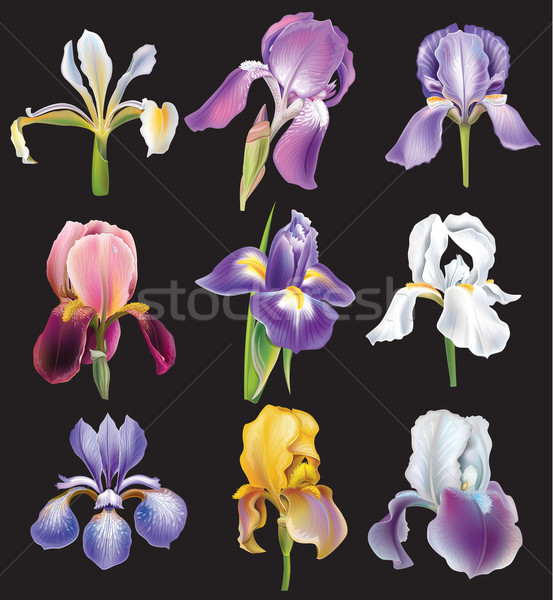 Set of Iris flowers Stock photo © Wikki