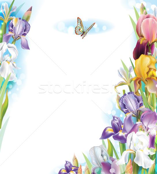ストックフォト: フレーム · アイリス · 花 · 自然 · 背景 · 夏