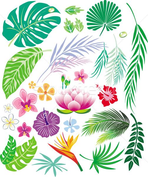 Tropische blad bloemen bloem boom natuur Stockfoto © Wikki