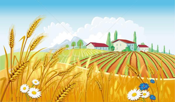 Velden home zomer brood tarwe Stockfoto © Wikki