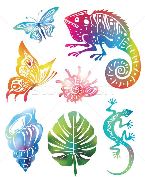 Gekleurd objecten natuur blad shell dier Stockfoto © Wikki