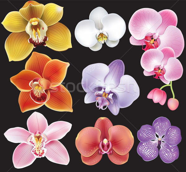 Collection of orchid flower Stock photo © Wikki