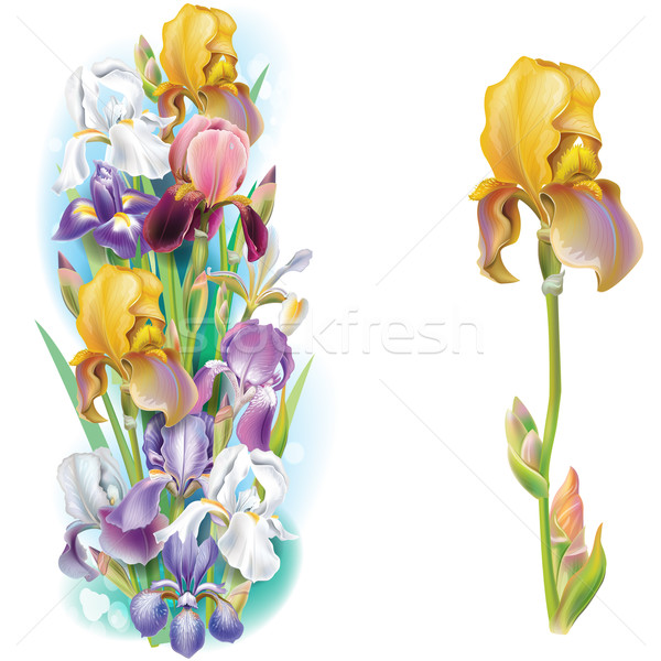 Iris flores naturaleza fondo verano verde Foto stock © Wikki