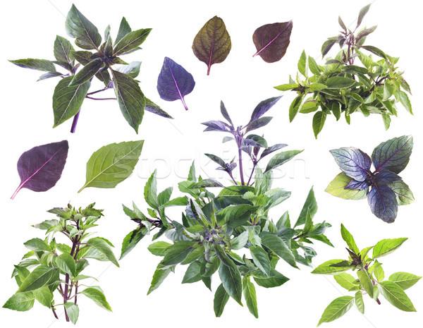 базилик лист здоровья зеленый Салат есть Сток-фото © Wikki