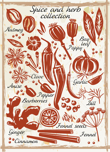 Stockfoto: Spice · kruid · collectie · voedsel · frame · groene