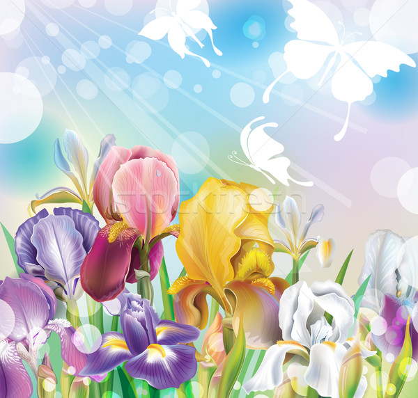 Background with Iris flowers Stock photo © Wikki