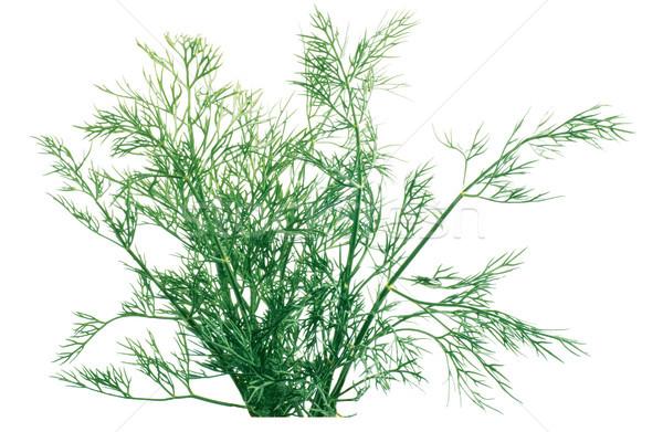 лист здоровья Кука растительное диета Сток-фото © Wikki