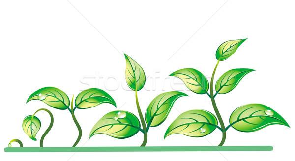 Progression of seedling growth Stock photo © Wikki