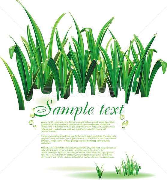 Stockfoto: Natuurlijke · voorjaar · achtergrond · groene · druppels · tekst