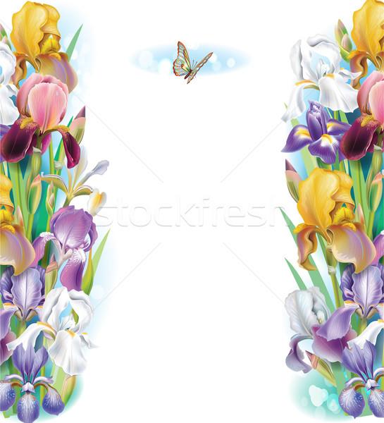 Keret írisz virágok természet háttér nyár Stock fotó © Wikki