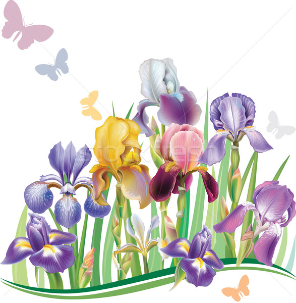 Iris flor verano tejido color Foto stock © Wikki