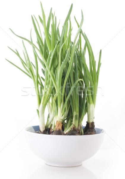 Spring onion in white bowl Stock photo © Wikki