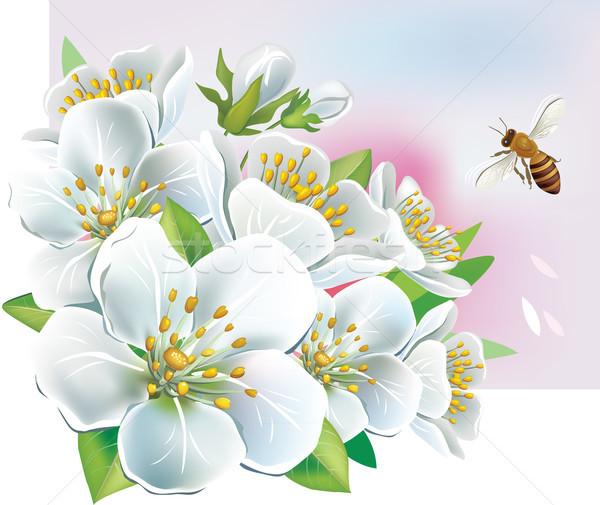 Tak bloei boom blad witte seizoen Stockfoto © Wikki