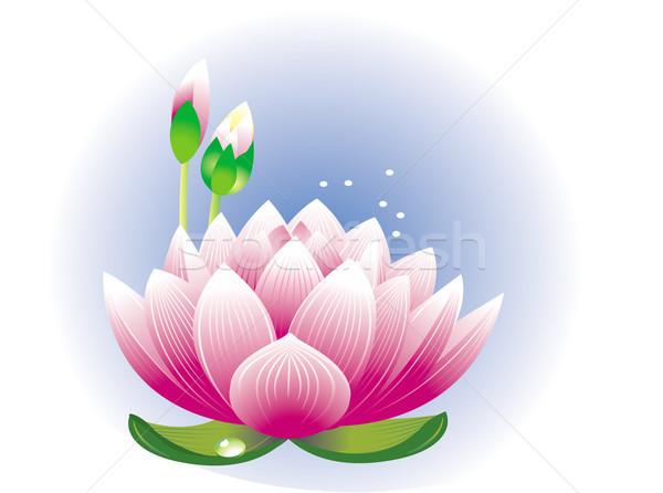 Lotus flower Stock photo © Wikki