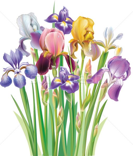 花束 アイリス 花束 花 自然 背景 ストックフォト © Wikki
