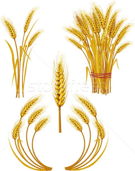 Tarwe voedsel natuur brood boerderij oor Stockfoto © Wikki