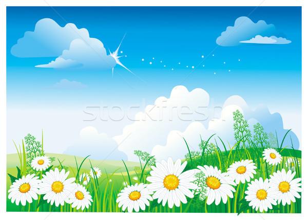 Kamille blauwe hemel voorjaar gras natuur blad Stockfoto © Wikki