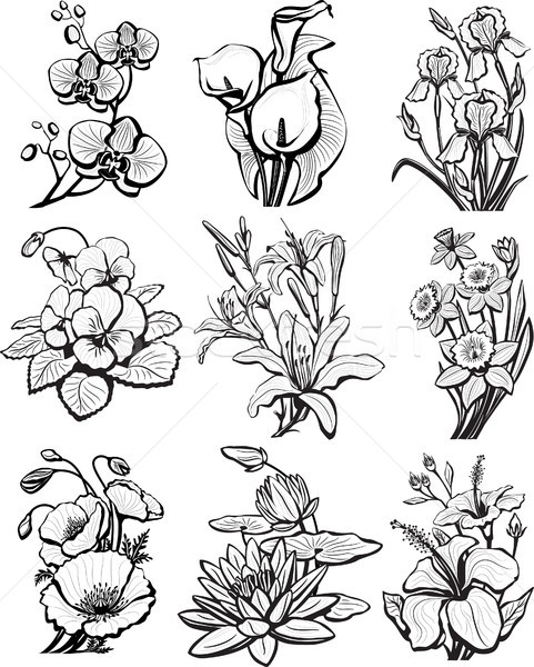 набор цветок природы силуэта чернила завода Сток-фото © Wikki