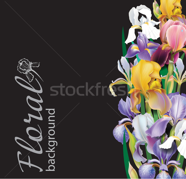 Iris flower vector background Stock photo © Wikki