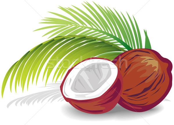 Kokosnoot natuur vruchten shell tropische witte Stockfoto © Wikki