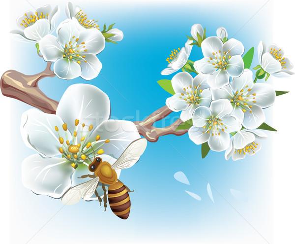 цветения филиала Bee дерево лист белый Сток-фото © Wikki