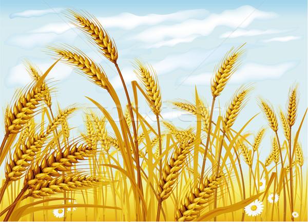 Voedsel natuur brood boerderij oor Stockfoto © Wikki