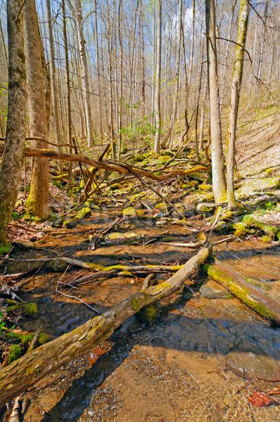 Montagne crique très tôt printemps vingt étroite Photo stock © wildnerdpix