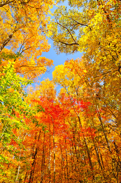 Fall Colors on a Midwest Trail Stock photo © wildnerdpix