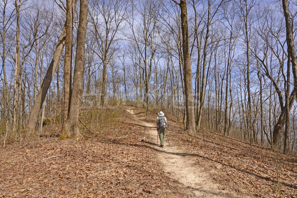Hiking up a Mountain trail Stock photo © wildnerdpix