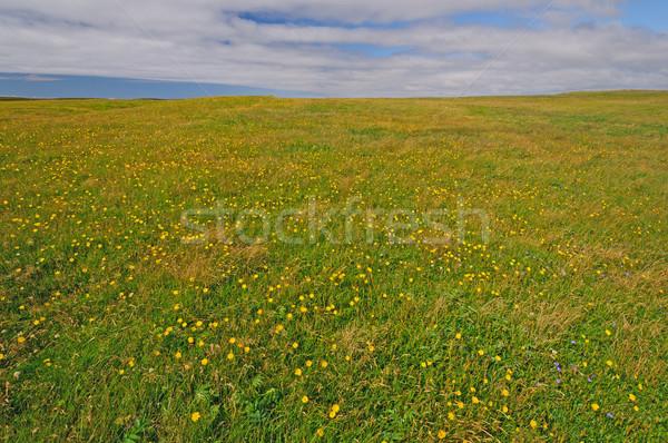 Kwiaty nowa fundlandia łące krajobraz panorama naturalnych Zdjęcia stock © wildnerdpix