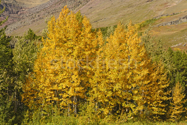 Fall Colors in the Rocky Mountains Stock photo © wildnerdpix