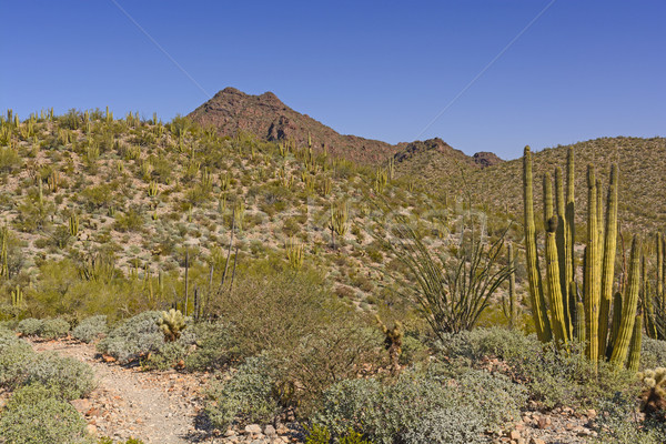 Desert Landscape in Spring Stock photo © wildnerdpix