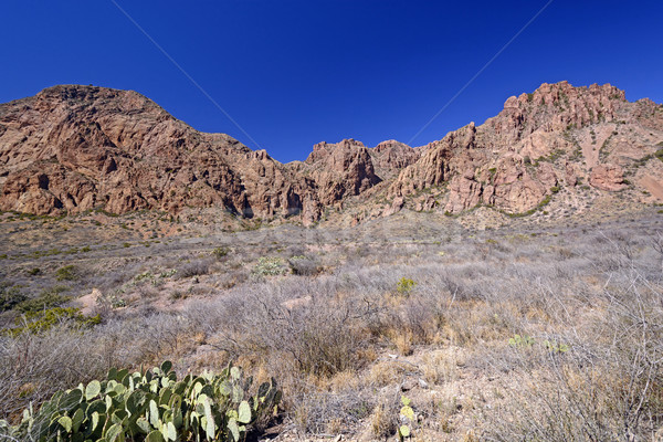 Desert Panorama in the Early Spring Stock photo © wildnerdpix