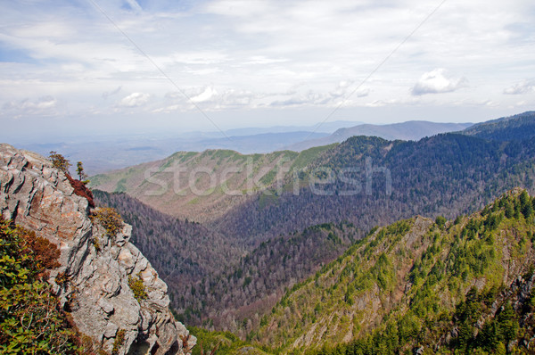 Smoky Mountain Vista in the Early Spring Stock photo © wildnerdpix