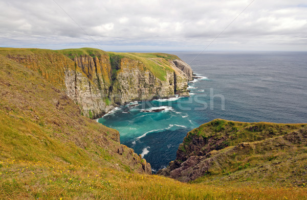 Meadows and Ocean Cliffs Stock photo © wildnerdpix