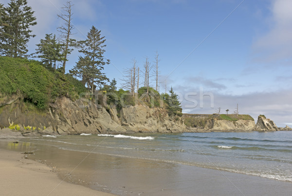 Rugged Coastal Beach on a Sunny Day Stock photo © wildnerdpix