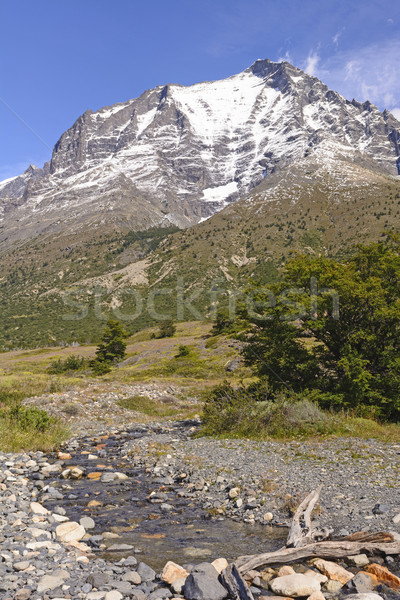Snowy Peak above the Meadow in Patagonia Stock photo © wildnerdpix