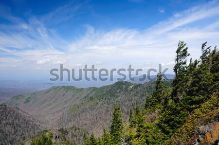 Blue skies on the Appalachian Trail Stock photo © wildnerdpix