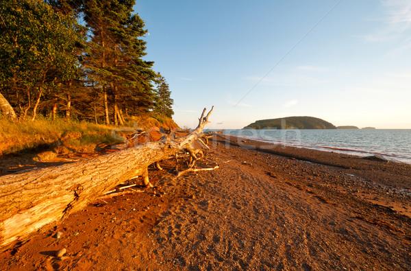 Coastal Log at Sunset Stock photo © wildnerdpix