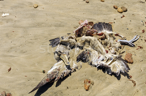 Dead Albatross on a remote Beach Stock photo © wildnerdpix