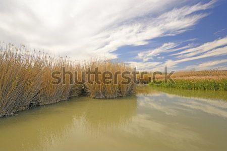 бобр пруд Рио реке большой Сток-фото © wildnerdpix