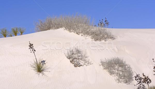 пустыне флора песок белый Нью-Мексико пейзаж Сток-фото © wildnerdpix