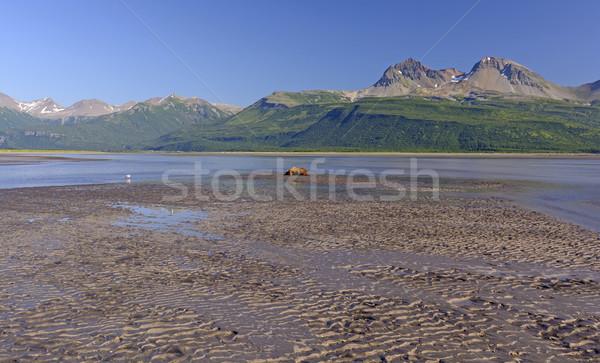 クマ 寝 泥 公園 アラスカ州 ビーチ ストックフォト © wildnerdpix