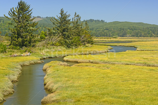 風景 生物 リモート 自然 ストックフォト © wildnerdpix
