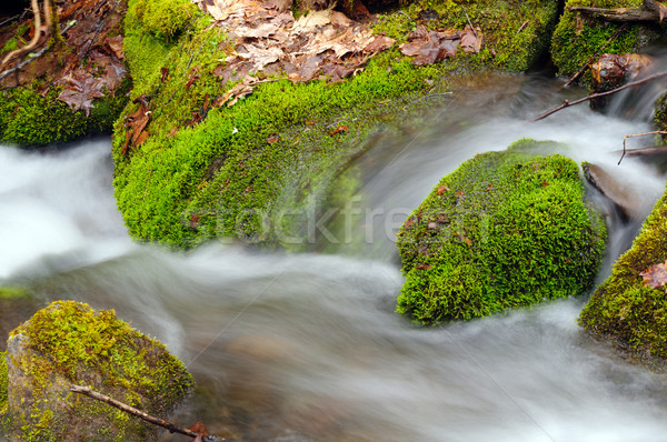 Moss and Leaves in a Mountain Stream Stock photo © wildnerdpix