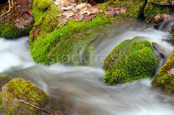 Mousse laisse montagne écouter printemps végétation Photo stock © wildnerdpix